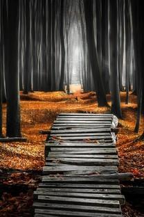 金黄色秋天森林树木小路图片壁纸