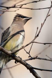 各种鸟类高清图片壁纸