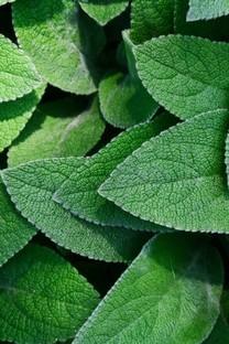 绿叶绿色养眼高清图片壁纸