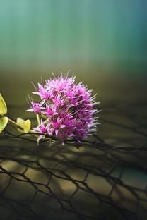 唯美小清新意境的花朵图片桌面壁纸