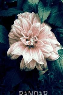唯美花儿高清风景壁纸