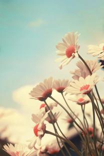 温馨的花朵高清壁纸