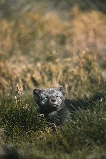 超萌可爱动物手机图片合集壁纸