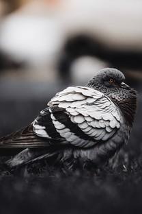 精致可爱小鸟高清图片壁纸