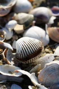 沙滩有好多漂亮的贝壳图片壁纸