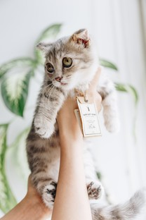 超可爱的小猫咪图片壁纸