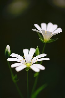 近距花卉植物手机图片壁纸