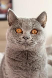 高清萌宠小猫图片壁纸