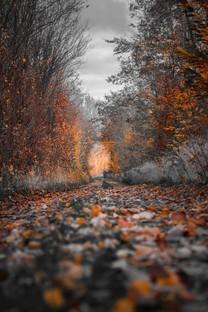 朦胧小径深林唯美图片壁纸