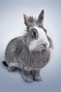 简单可爱小清新兔子图片壁纸