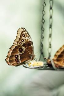 唯美好看的蝴蝶图片壁纸