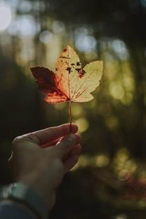 手中一个叶唯美图片壁纸