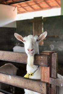 可爱羊羊图片壁纸