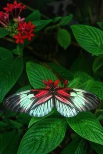 唯美绚丽蝴蝶手机图片壁纸