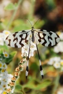 唯美的蝴蝶在飞舞手机图片壁纸