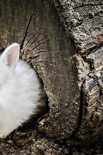 软萌可爱的小兔子图片壁纸