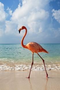 海边上的小动物图片壁纸