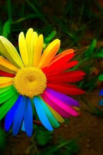 炫酷彩色花卉图片壁纸