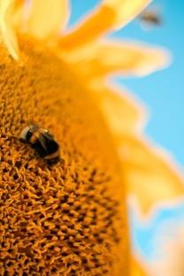 蝴蝶和蜜蜂高清图片动物壁纸