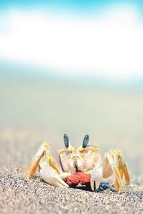 螃蟹图片手机壁纸