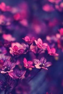 唯美粉色系植物花卉高清图片壁纸