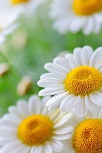 清新好看的花风景图片壁纸