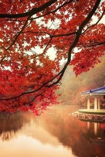 秋天枫叶梦幻意境背景图片壁纸