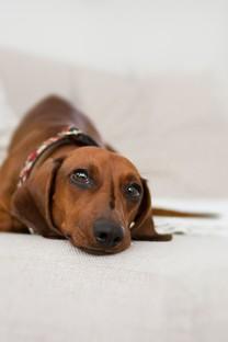 趴着的可爱狗狗图片壁纸