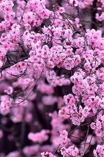 清新好看的花风景图片壁纸2