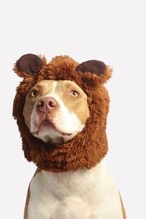 超萌可爱搞笑狗头图片壁纸