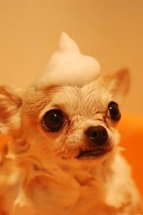 超萌可爱搞笑狗头图片壁纸2