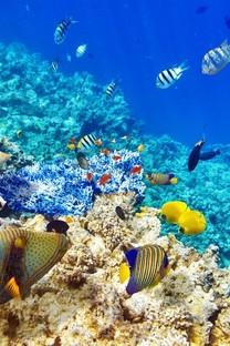海底珊瑚鱼群唯美图片壁纸