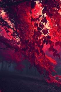 秋日的枫叶林唯美意境高清图片壁纸