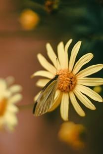 蝴蝶唯美意境背景图片壁纸