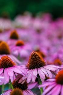高清花卉图片壁纸