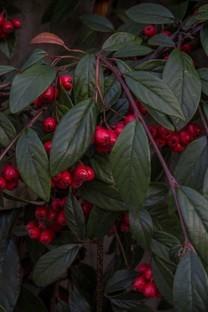 精选树上的果实诱人高清图片壁纸