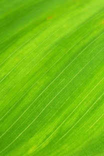 绿色系小清新护眼桌面壁纸2