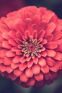 高清唯美清新花朵壁纸