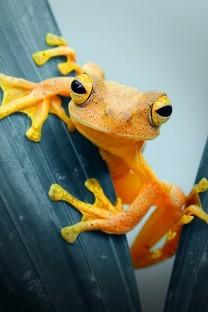 可爱的青蛙图片壁纸