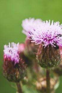 朦胧的花朵摄影高清图片壁纸