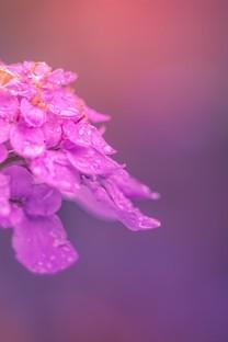 清晨带露水的花图片壁纸