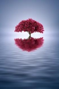 漂亮小树唯美图片壁纸