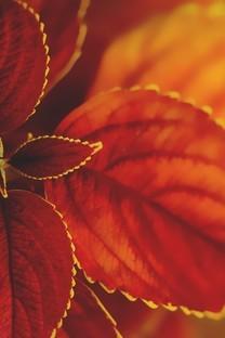 清晰树叶子图片壁纸