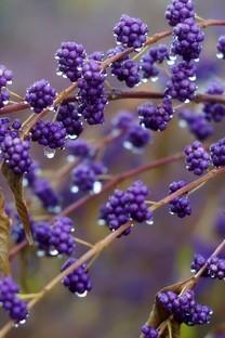 好看的雨后最美的植物图片壁纸2