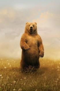 可爱的棕熊的图片壁纸