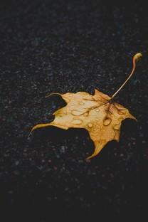 清晨叶子上的露水图片壁纸