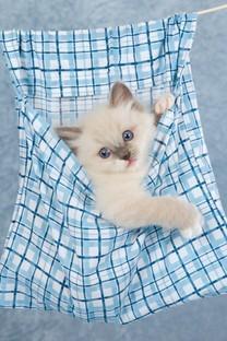精选可爱的白色猫咪图片壁纸
