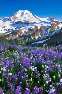 雪山下的花海图片壁纸