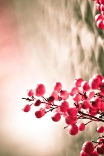 唯美意境花草植物图片壁纸
