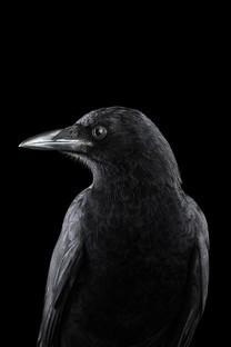 彩色鸟的黑色背景壁纸